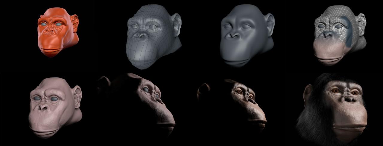 WiP Chimpanzee